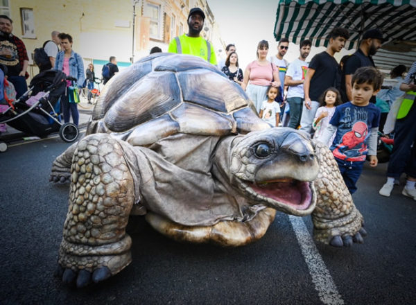 zelva the giant tortoise in fulham 2019 photo © Justin Thomas Hammersmith and Fulham Council
