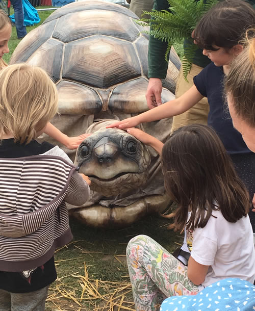 zelva the giant tortoise